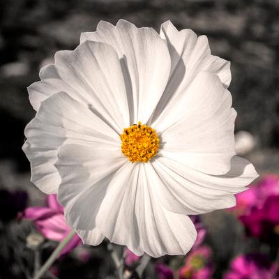 White Flower 12x12 Crop