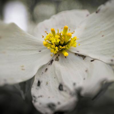 Flower Macro 1 12x12 Crop